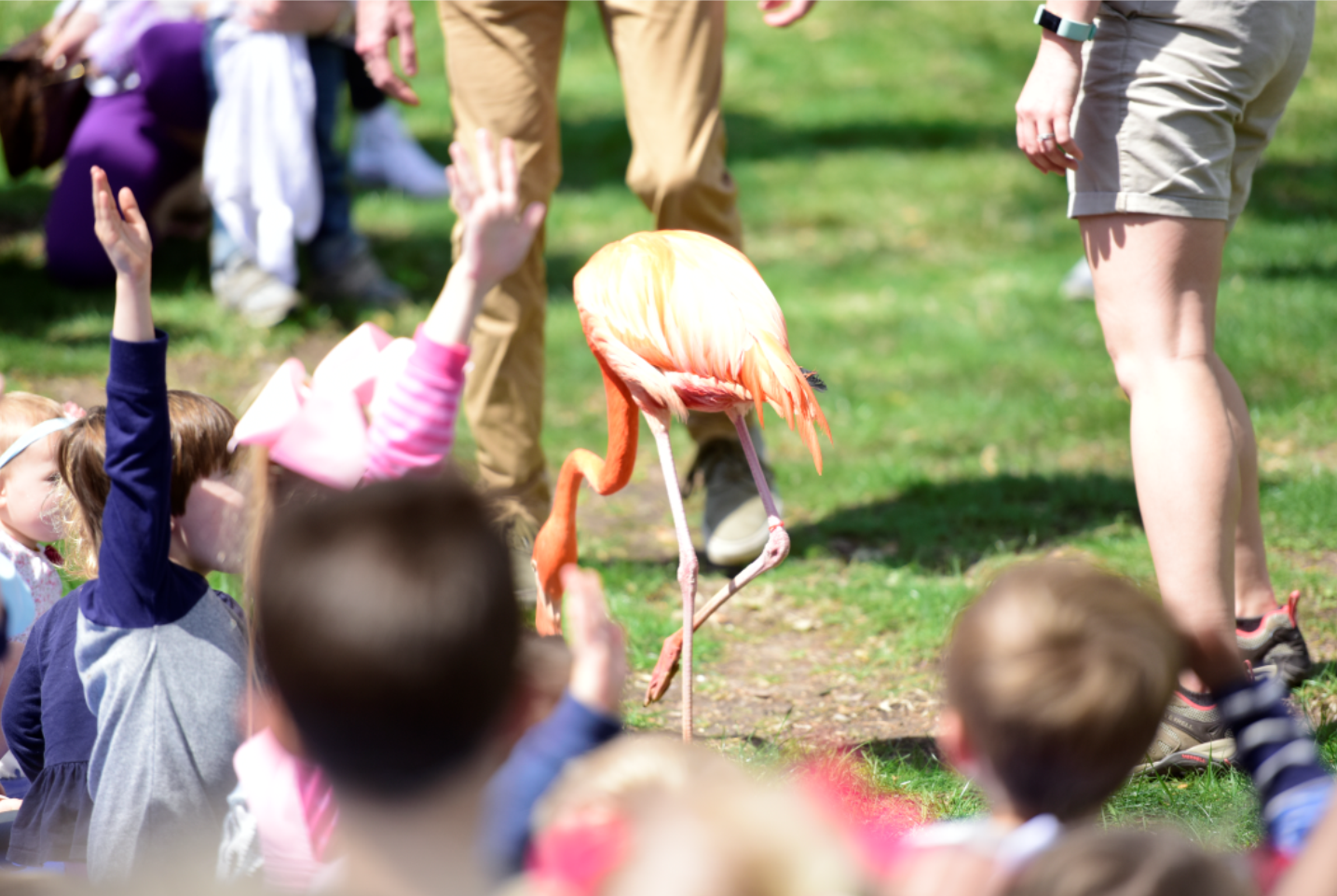 HPL Zoo Program Image