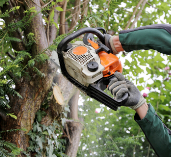 chainsaw clearing brush