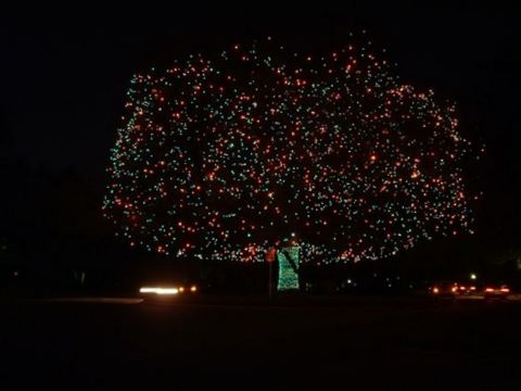 lighted pecan tree