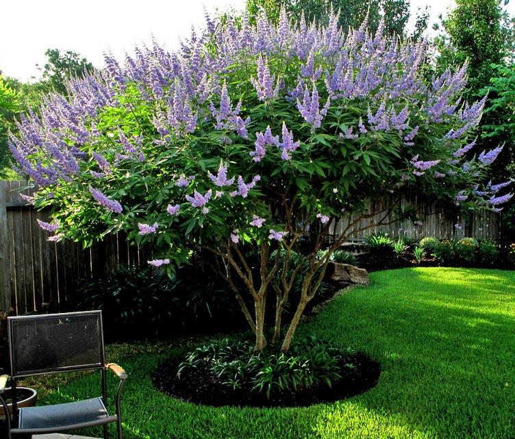 Highland Park, TX - Official Website - Garden Area 1